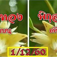 หวยพิกุลทอง เลขดับบน-ล่าง งวดวันที่ 1/12/60